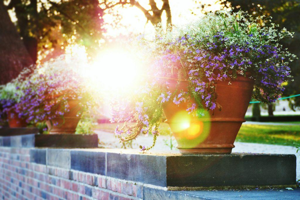 provence zahrada